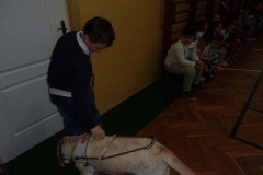 Zajęcia z psem przewodnikiem